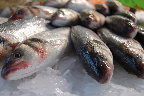 pescado_azul_blanco