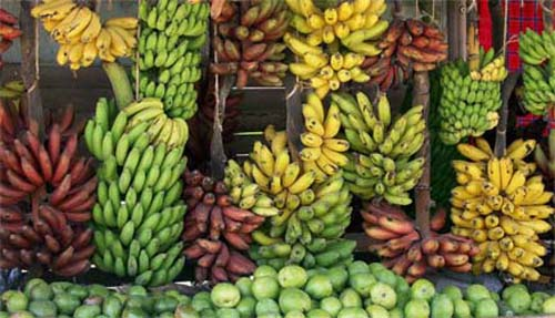variedades-de-bananas